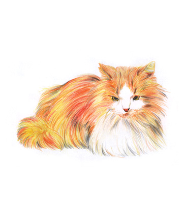 Ilustração gato lápis de cor